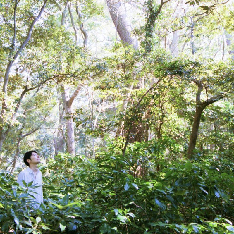 cd 生命の森展 ジャケット